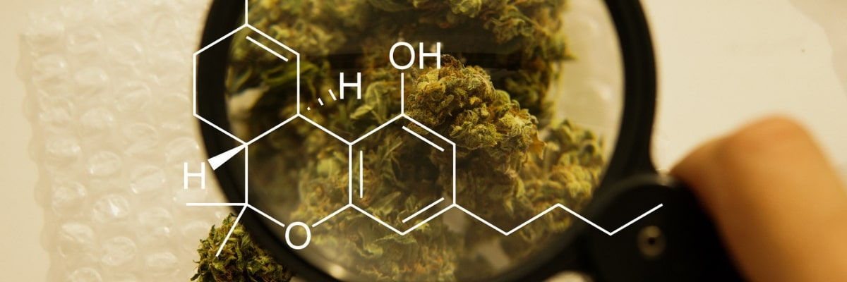 The Facts on Medical Marijuana