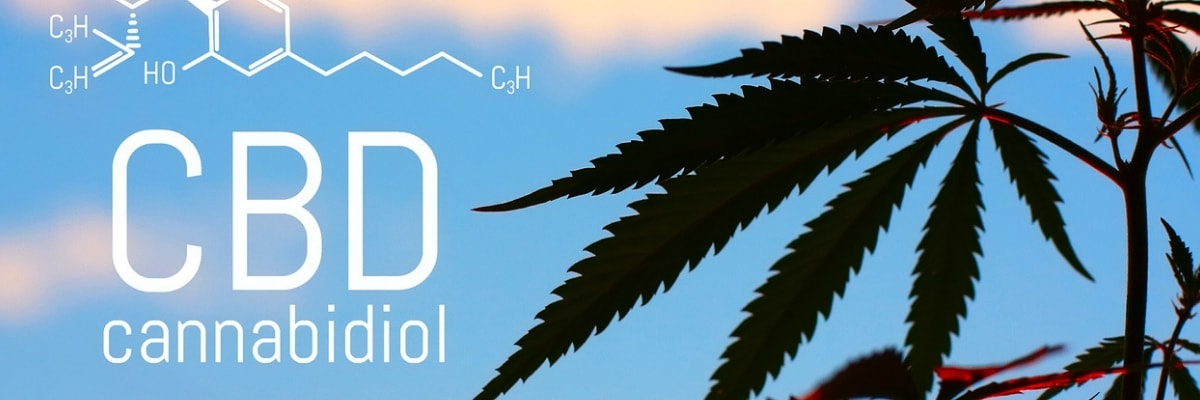CBD, THC, and the Endocannabinoid System