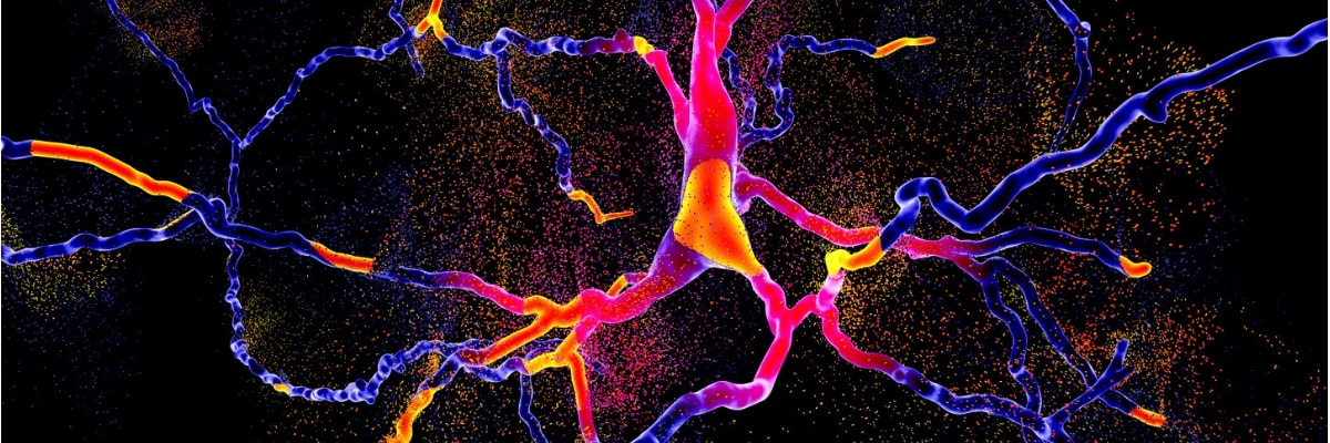 Parkinson's Disease and the Brain
